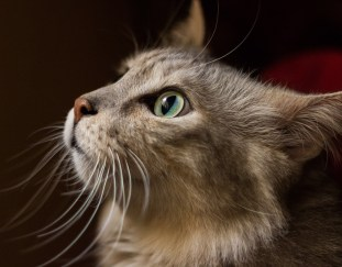 why-do-cats-have-whiskers