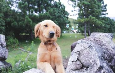 why-do-dogs-eat-rocks