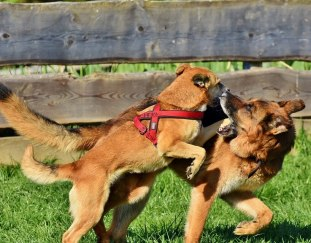 how-to-break-up-a-dog-fight