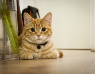 how-to-get-rid-of-cat-urine-odor-in-house