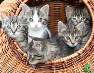 how-to-introduce-a-kitten-to-a-cat