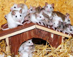 where-do-hamsters-live-outside-of-pet-stores