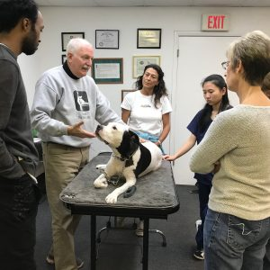 PetMassage Workshops
