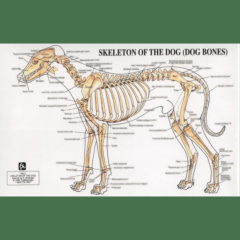 Petmassage chart 3 skeleton of the dog petmassage training and petmassage ccuart Gallery