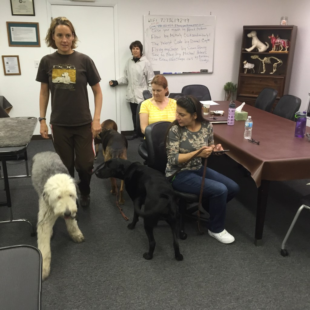 PetMassage Dog Handling Pic 2