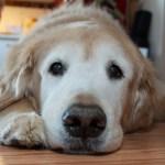 犬の外耳炎について