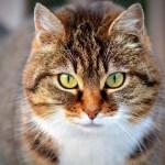 猫の生命にかかわる危険性の高い植物