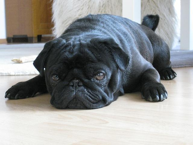dog-123722_640 (1)