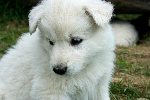 dog-205666_640