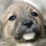 犬の黒目や白目の変色