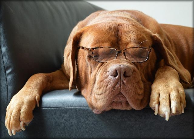 bordeaux-dog-217018_640