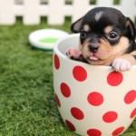 カナガンドッグフードは子犬に食べさせてもいいですか?