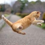 猫の健康管理で普段から気をつけていること