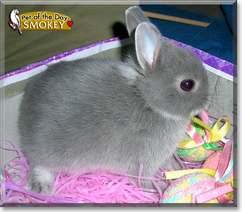 Smokey, the Pet of the Day