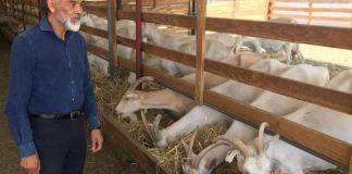 Crianza de cabras
