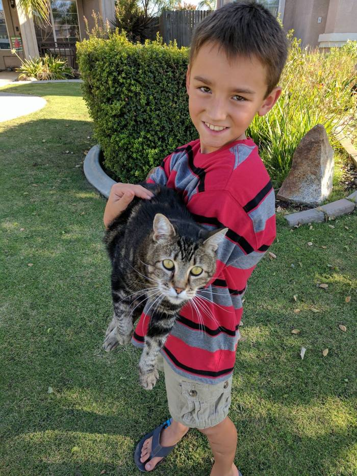 Feisty feline Tara saved a four-year old from what could have been fatal injuries