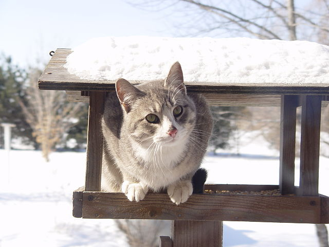 Neither domesticated cats nor feral felines are used to frigid outdoor temperatures, so please don't let them suffer from the deadly cold. Photo courtesy of Jacob Rush