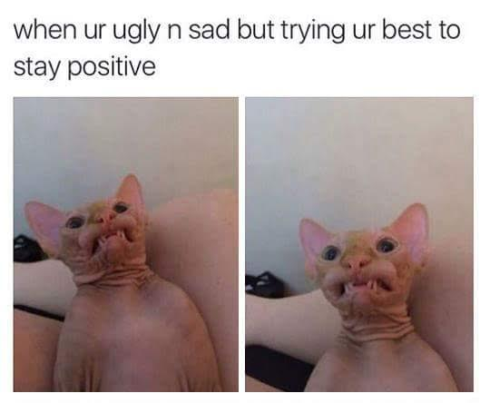 sphynx cat meme