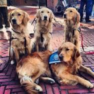 Dogs BAA