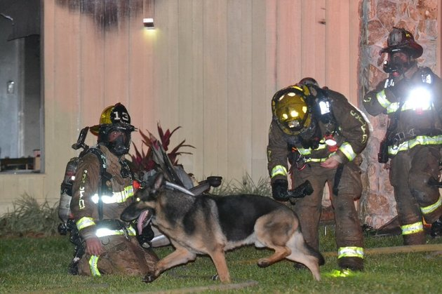 Maxx and firefighters