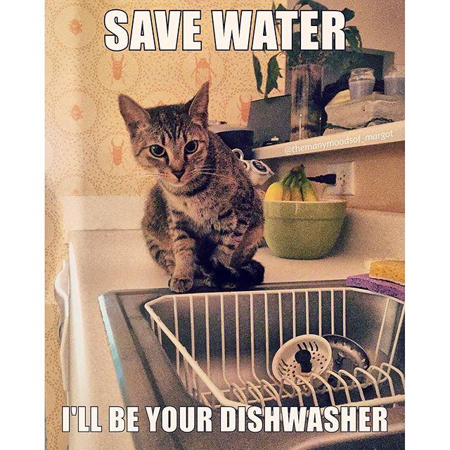 cat-save-water-spit-shine-dishwasher-memes