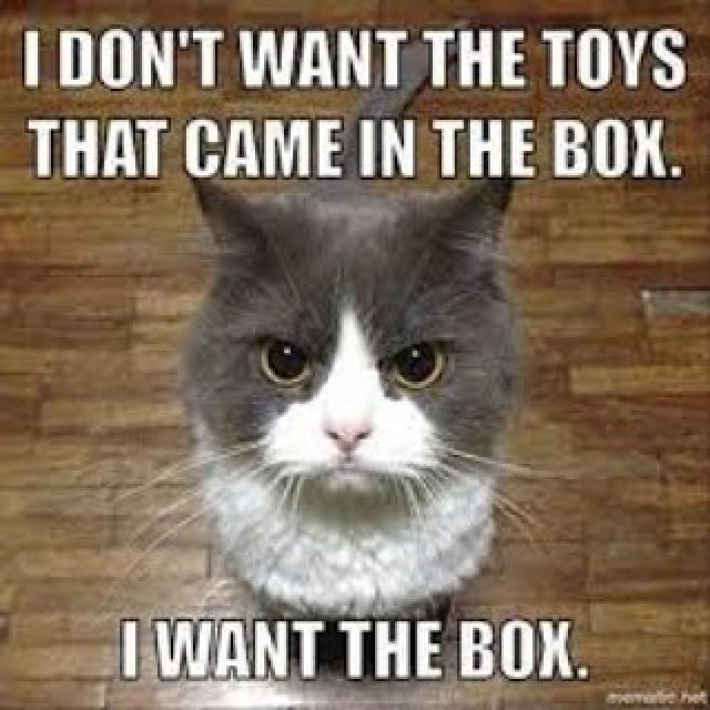 cat-toys-cardboard-box-gift-memes-lol