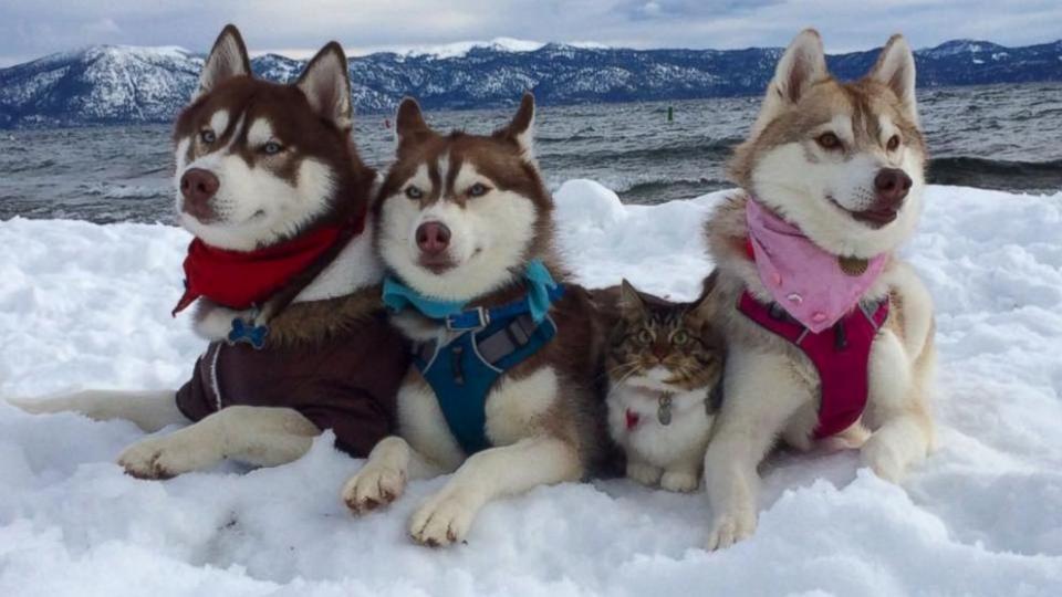 HT_Cat_Huskies_2_ER_160120_16x9_992.jpg 5.12.16
