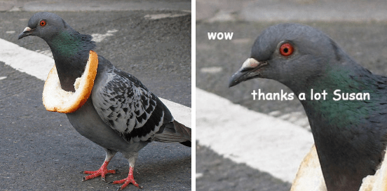 me as a pigeon 1 5.20