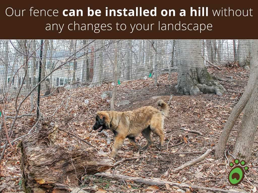 hill-black-face-dog