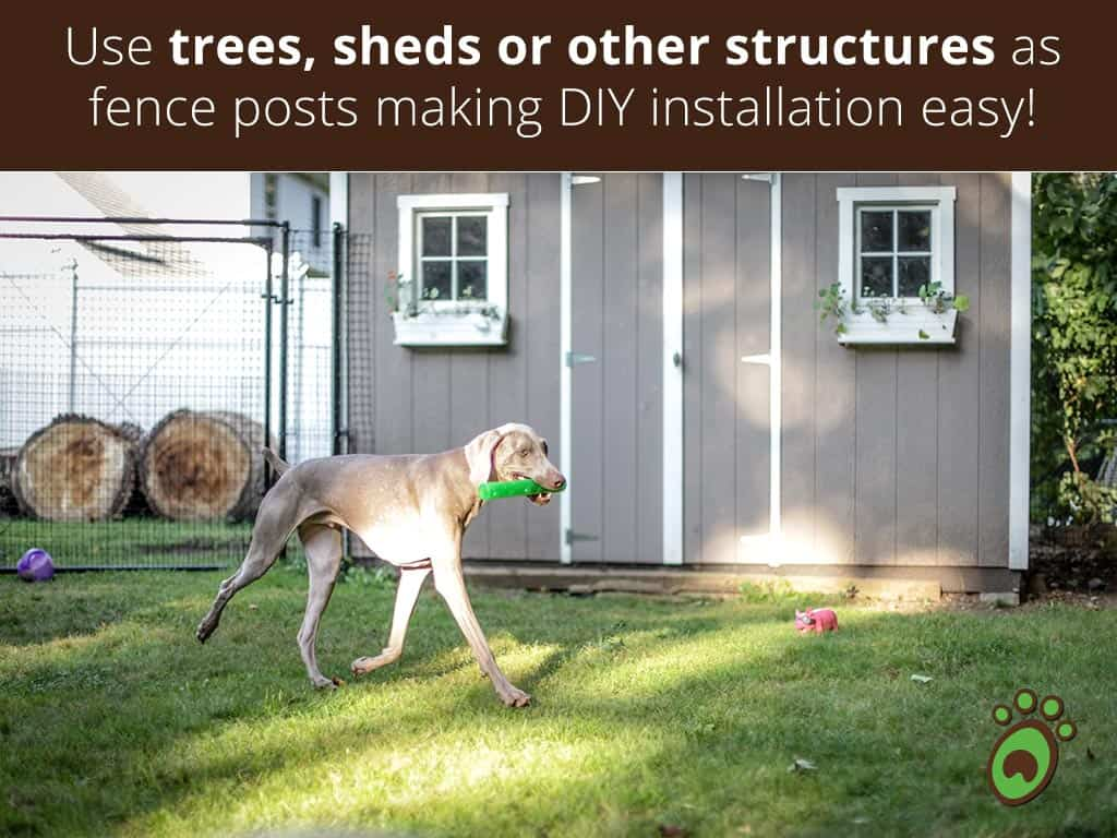 dog-grey-shed