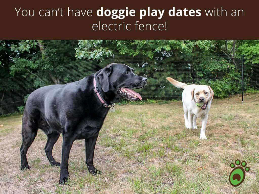 doggie-play-dates