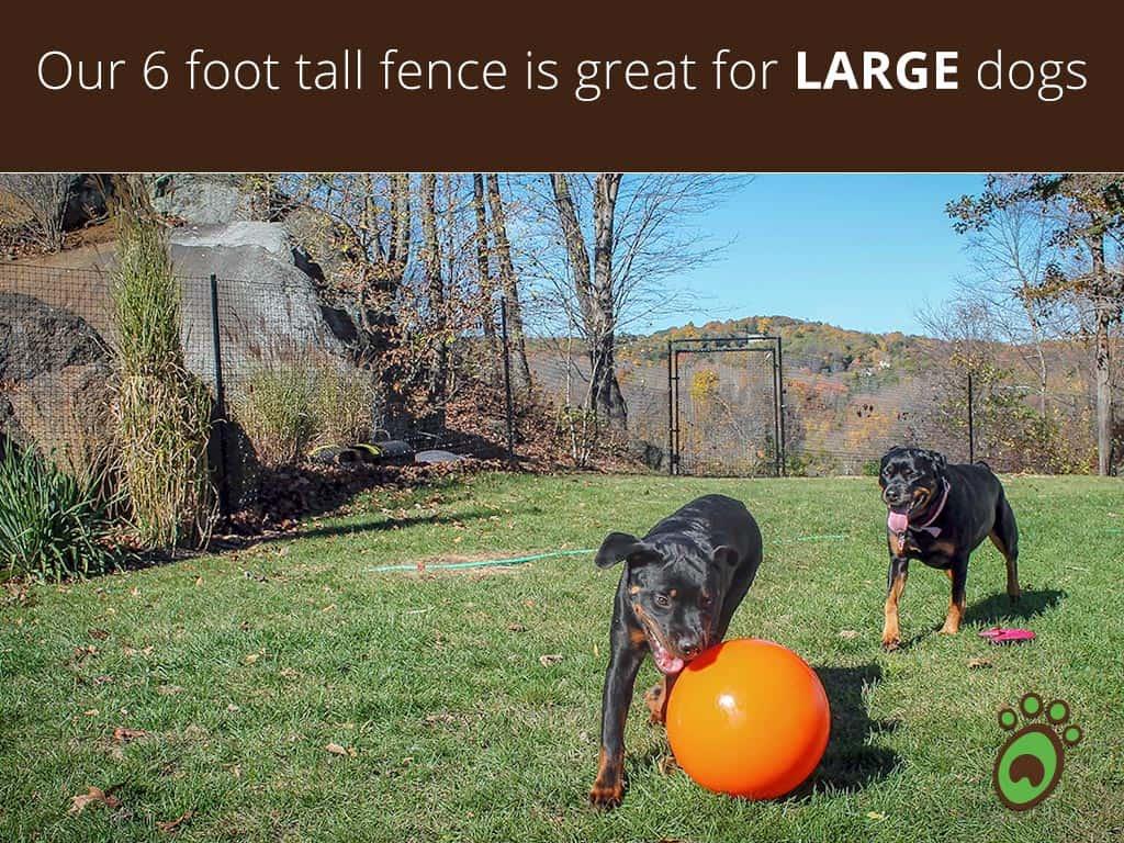 rottweiler-dog-fence