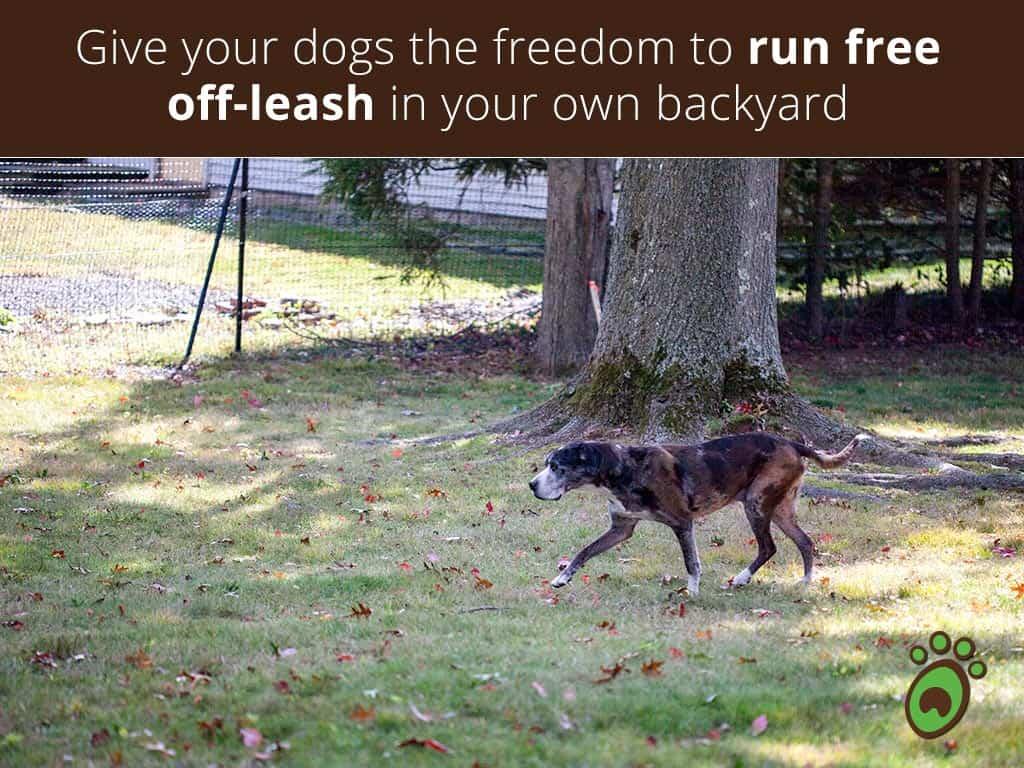 run-free-walking-dog