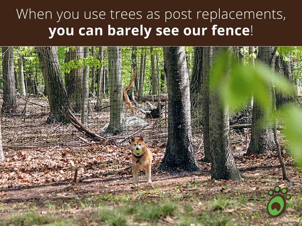 trees-posts-dog-ball
