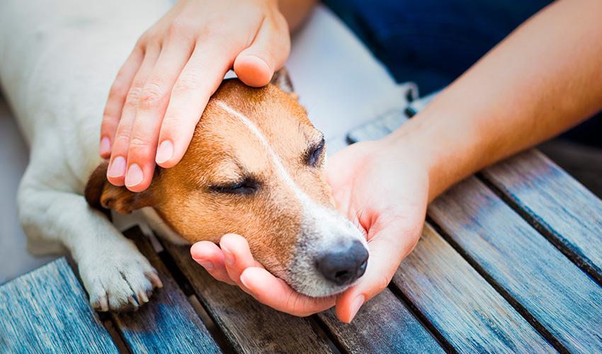 Veja como proteger o pet de infestações e entenda por que é importante evitar que o problema aconteça.