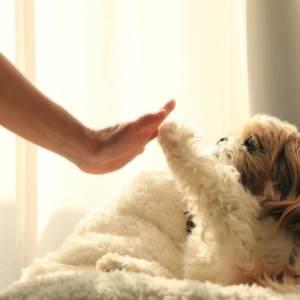 飼い主を信頼している犬