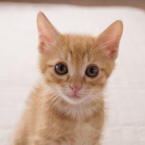 こちらを見る子猫