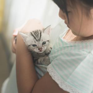 身体の上に乗る猫