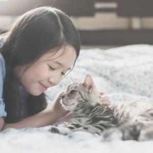 人になつく猫