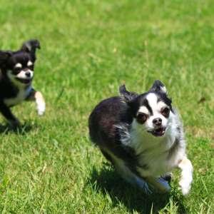飛びついてくる犬
