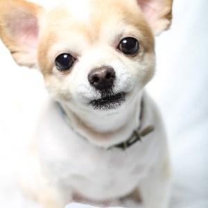 犬の不安分離とは何か