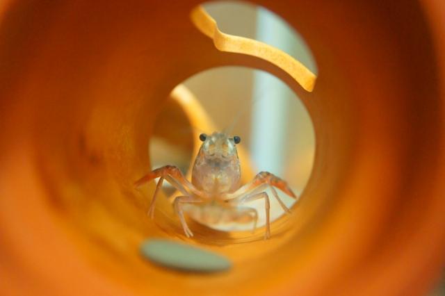 ザリガニが臭い時の対処法5つ。ザリガニの水槽の臭いを解消しよう