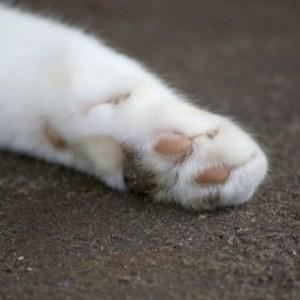 猫が猫パンチをする時の意味や心理