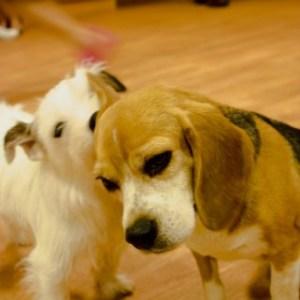 犬に関わるボランティア