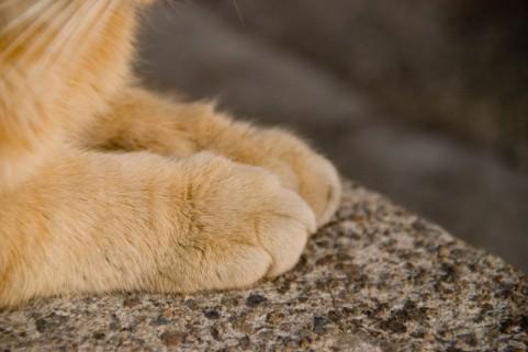 猫が前足でもみもみする理由