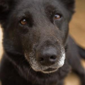 犬が喜ぶ上手な撫で方