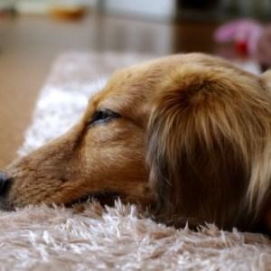 犬のダニ予防対策