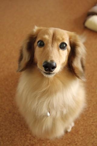 甘えん坊な犬の心理。飼い主にすりよる甘えんぼうな犬の気持ちを知ろう
