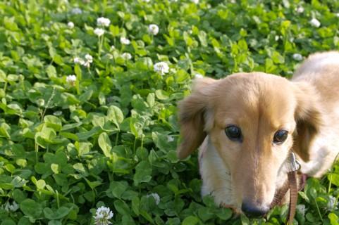 垂れ耳な犬7種。垂れ耳な犬に癒やされよう