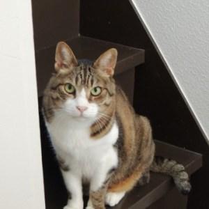 猫のトイレトレーニング方法